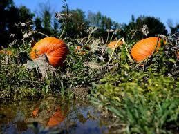 Pumpins dead