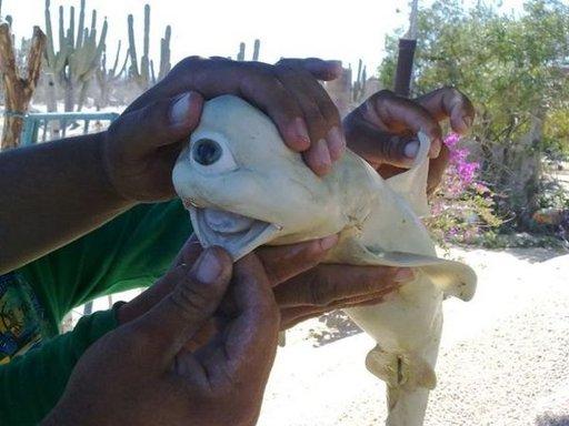 cyclops-shark-111017_124158