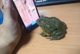 Frog phone