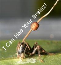Ant Zombie Ant